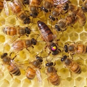 Mesilasemad