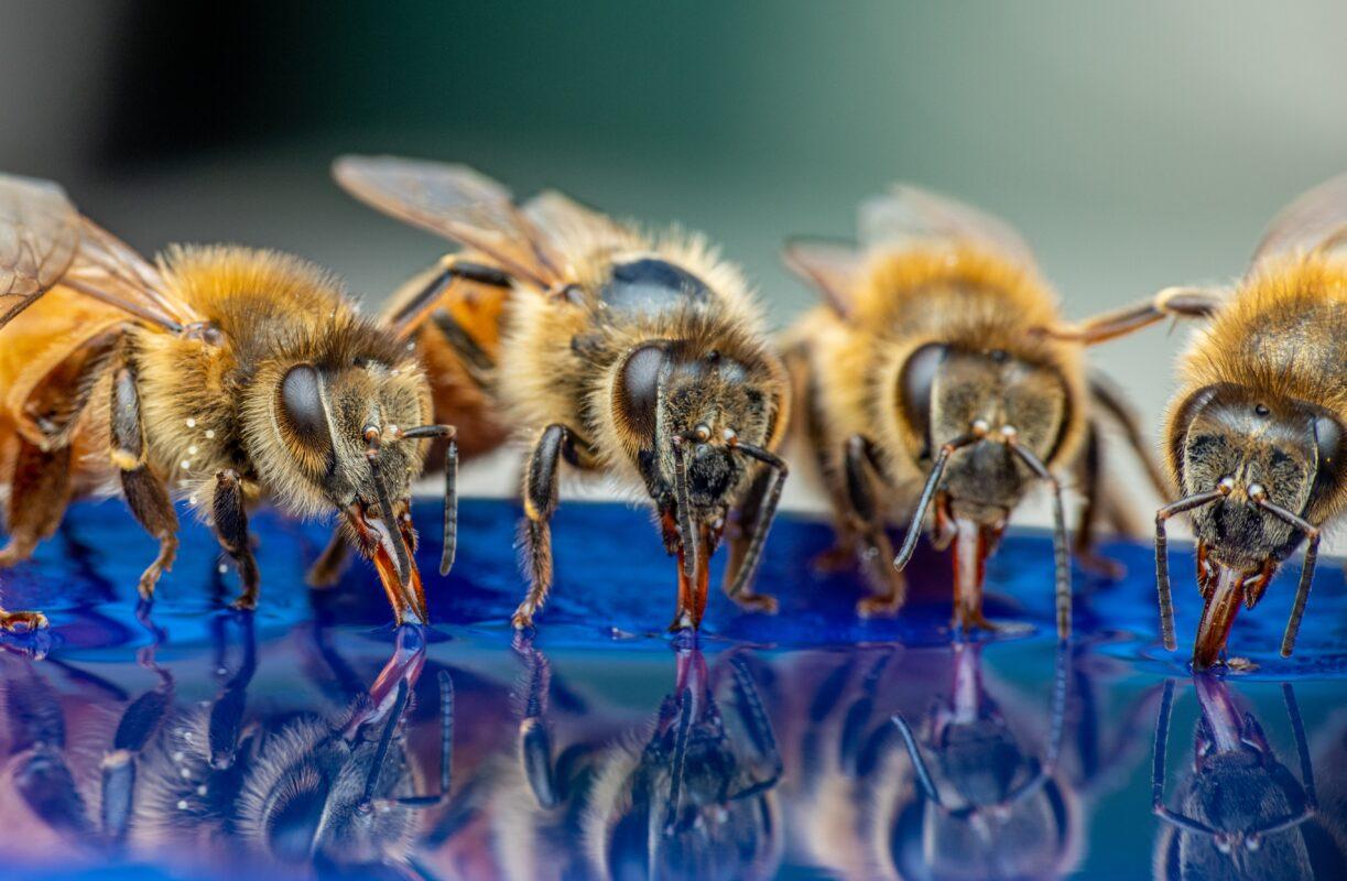 Alustava mesiniku komplekt